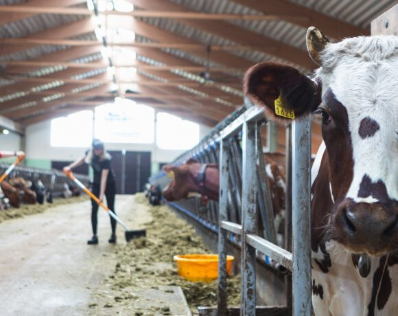 Podcast maitotilan varautumissuunnitelmasta