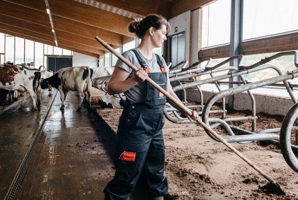 Hanna Mähönen: Jokainen lehmä on tarinan arvoinen